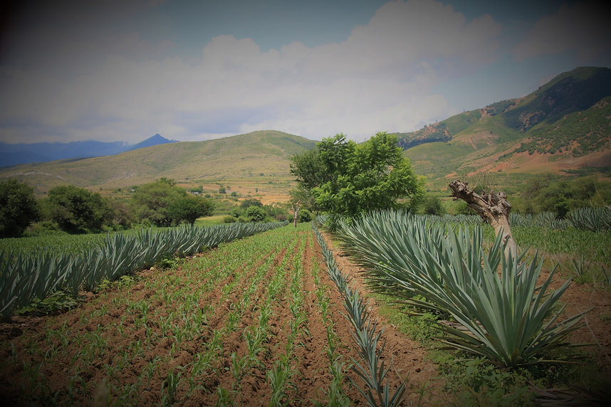 cultured spirits contact us. ​Your Premium International Spirit Supplier We are committed to delivering outstanding spirits from across Latin America to our customers in the US. Join us for a drink and celebrate flavor, stories, and community in every bottle.  ​  Inspired by the natural resource stewardship system in San Juan del Río, Oaxaca, we are a 1 % for the Planet member. One percent of our annual sales support environmental initiatives in the US & Latin America.