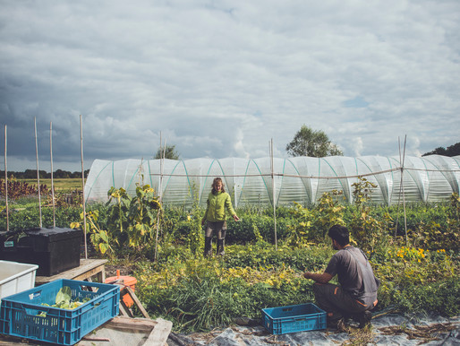 Fighting for organic Amsterdam: Urban Farming
