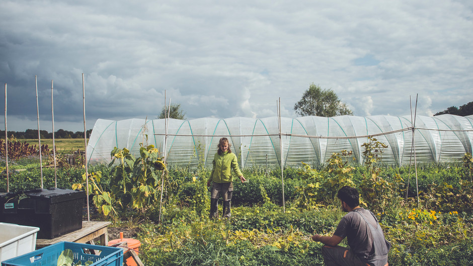 Fighting for organic Amsterdam: Urban Farming