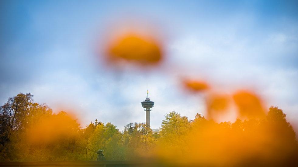 Autumn in Tampere - October - Laura Vanz