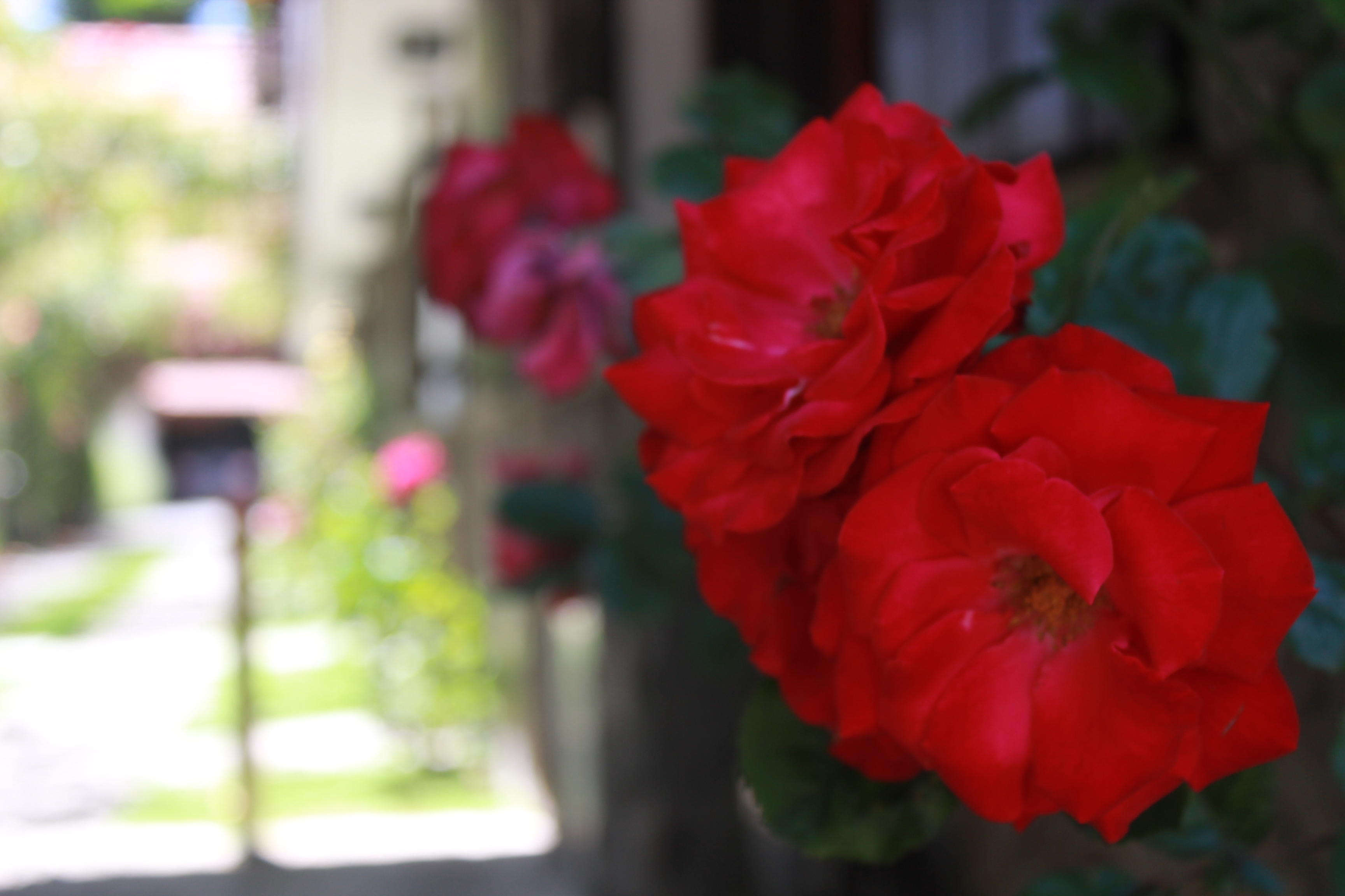 Cabañas con jardín y quincho
