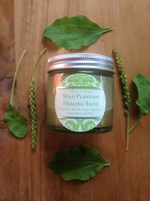 PLANTAIN HERBAL SALVE - Super gentle, soothing organic ointment