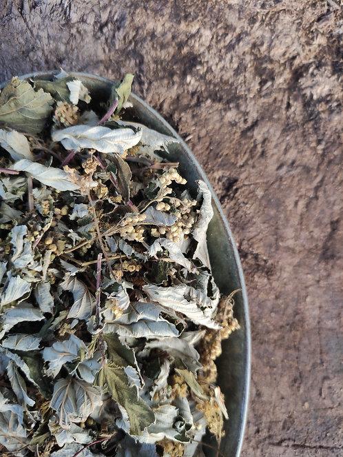 WILD MEADOWSWEET - Flowering Tops - Filipendula ulmaria