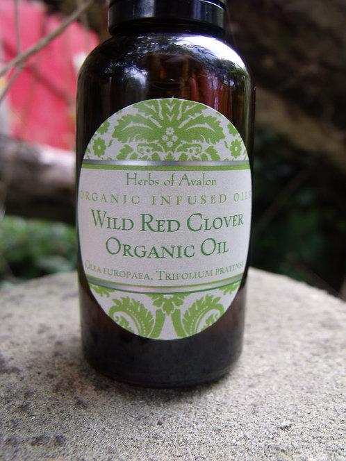 RED CLOVER INFUSED OIL - Wild Trifolium pratense in organic Olea europaea