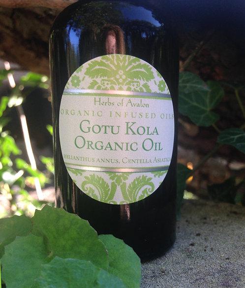 GOTU KOLA INFUSED OIL - Organic Centella asiatica - Brahma Buti - Hydrocotyle
