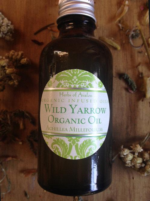 YARROW INFUSED OIL -Wild Achillea millefolium in organic oil