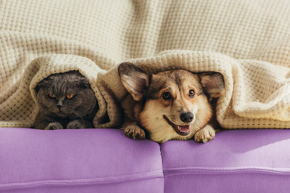 Pets-Pulsar-Website-Social-Display.jpeg