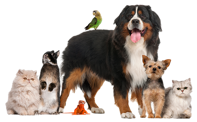 pets-group-smaller.png