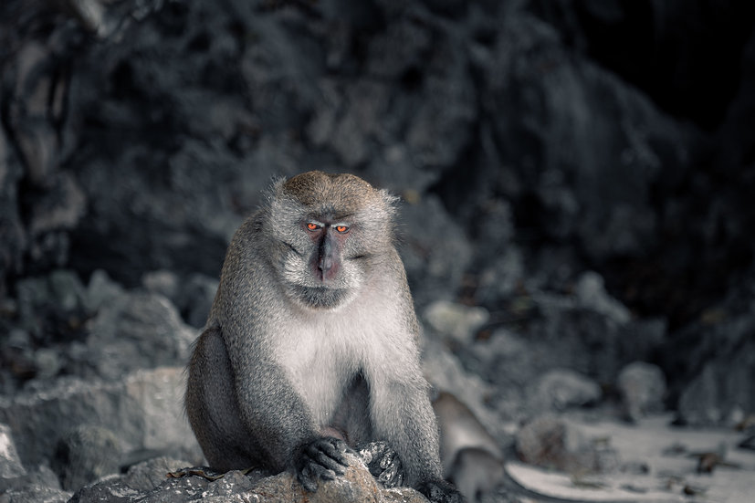 The Thailand Monkey
