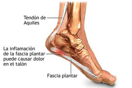 estructura del pie, ligamentos y tendones