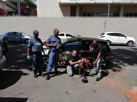 CAP ATTENDS SAPS DRUG BUST OPERATION