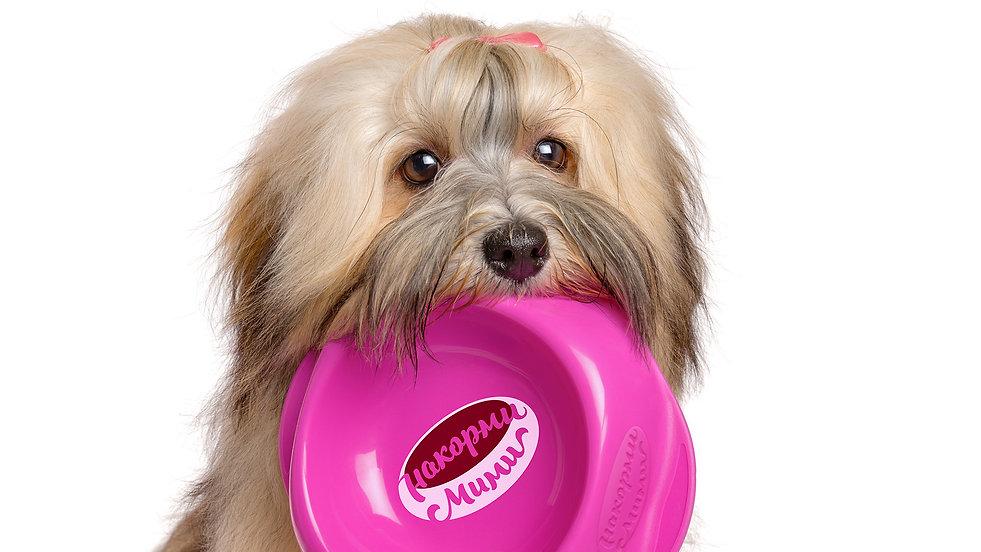 Собака держит в зубах миску.jpg