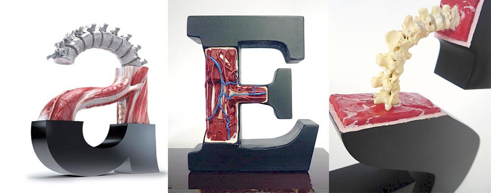 Anatomy letter.jpg