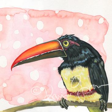 Tropicana Toucan
