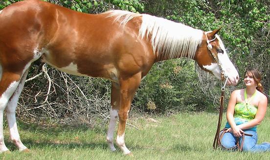Deaf Horse