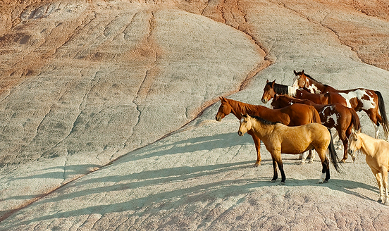 Deaf Horse, Paint Horses, Splashed White Horse, bald face horse