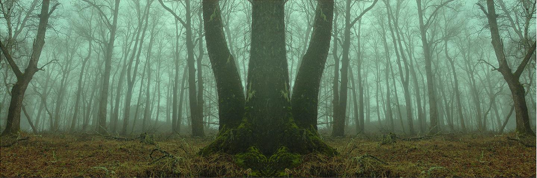 El bosque de Sil