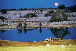 Etosha National Park. Namibia