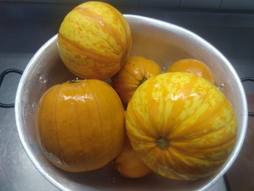 Pumpkins & Winter Squash