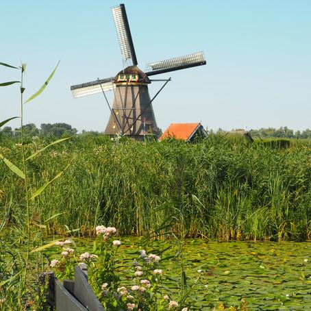 Dutch Dreaming