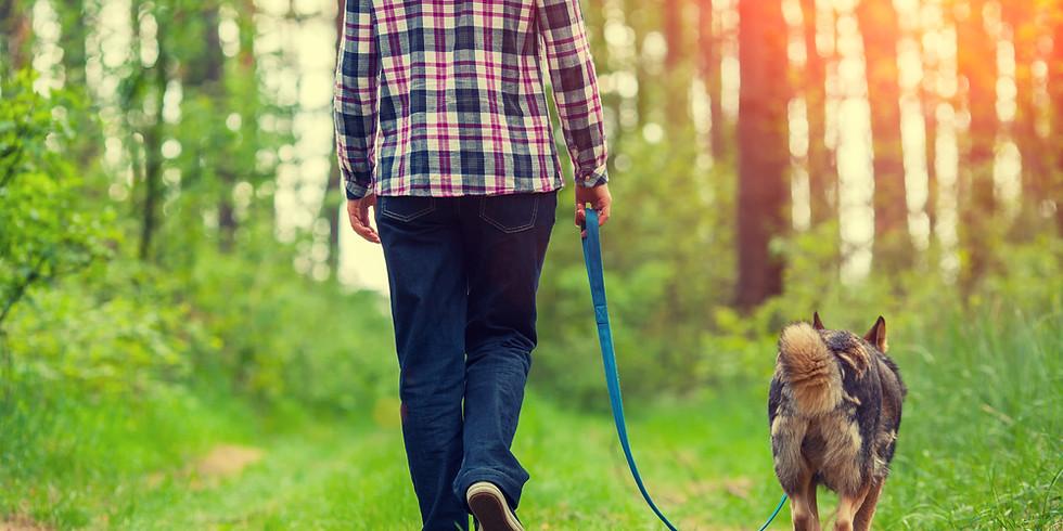 Lezing: Honden opvoeden zonder commando's