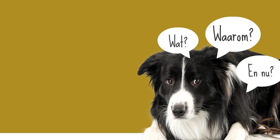 Lezing: Agressie bij jonge honden