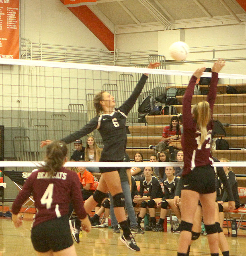 Volleyball team building strength as season reaches mid-point
