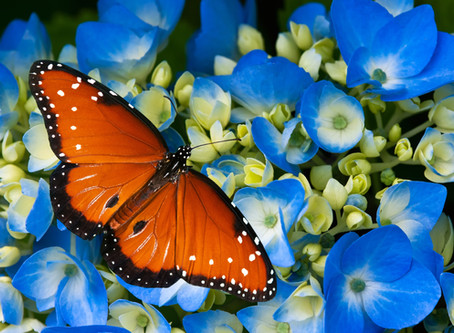 In High Praise of the Butterfly