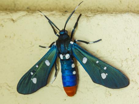 It's Moth Week! Let's Celebrate!