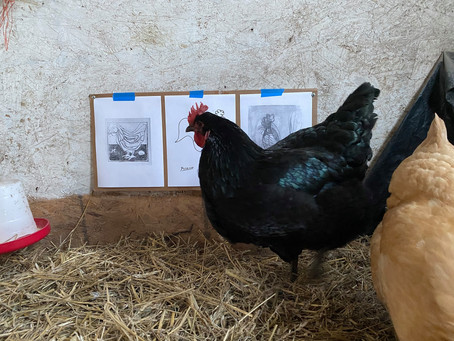 An Ode to The Chicken Museum