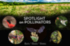 GenericTitleSpotlight.jpg