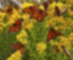 shutterstock_83169007.jpg
