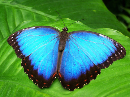 """It's the Official """"Learn About Butterflies"""" Day!"""