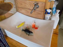 手洗い場の魚たち