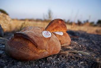 REGIONE - Il Consiglio regionale chiede riconoscimento Unesco per il pane di Altamura