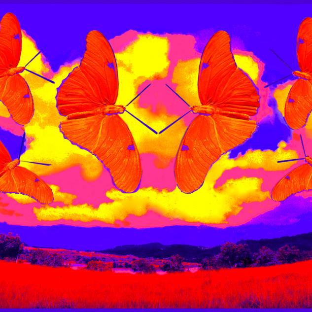 Butterfliy Sky