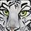 Thumbnail: White tiger