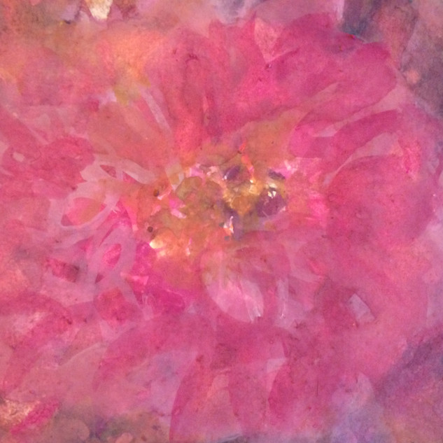 Rose de Paradise II