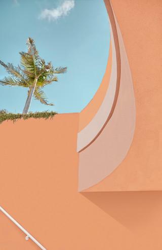 Curbside Palm