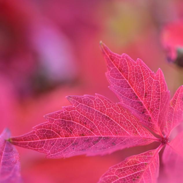 """Serie """"I colori dell'autunno"""" - foto 6"""