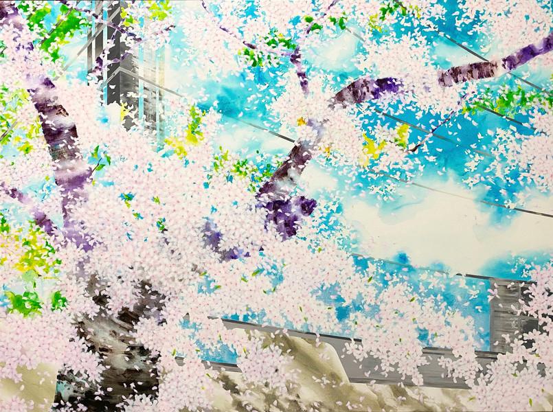 Cherry Blossoms - p.m. 13:00