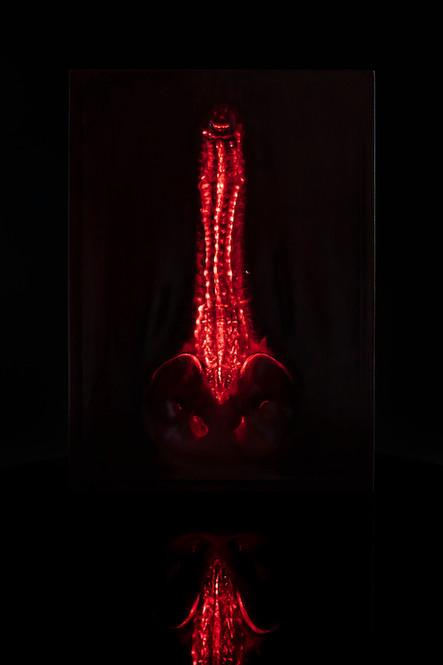 vertebrate-trench-dettaglio-2jpg