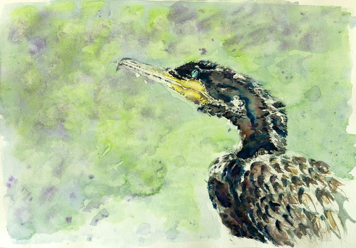 The BLACK* Cormorant (Neotropic Cormorant)