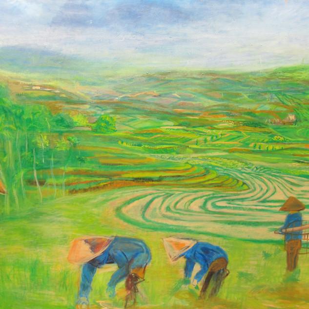 Vietnam's Fields Of Rice