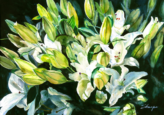 Lilies from Chateau Chenonceau, France