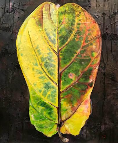 Lyre fig tree leaf