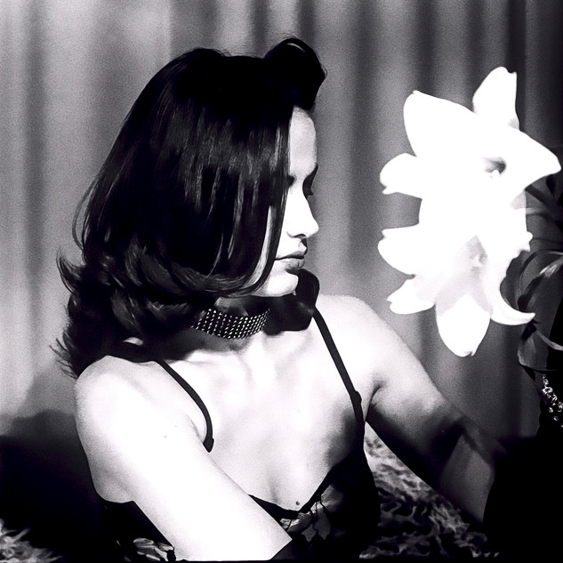 Casablanka Lily