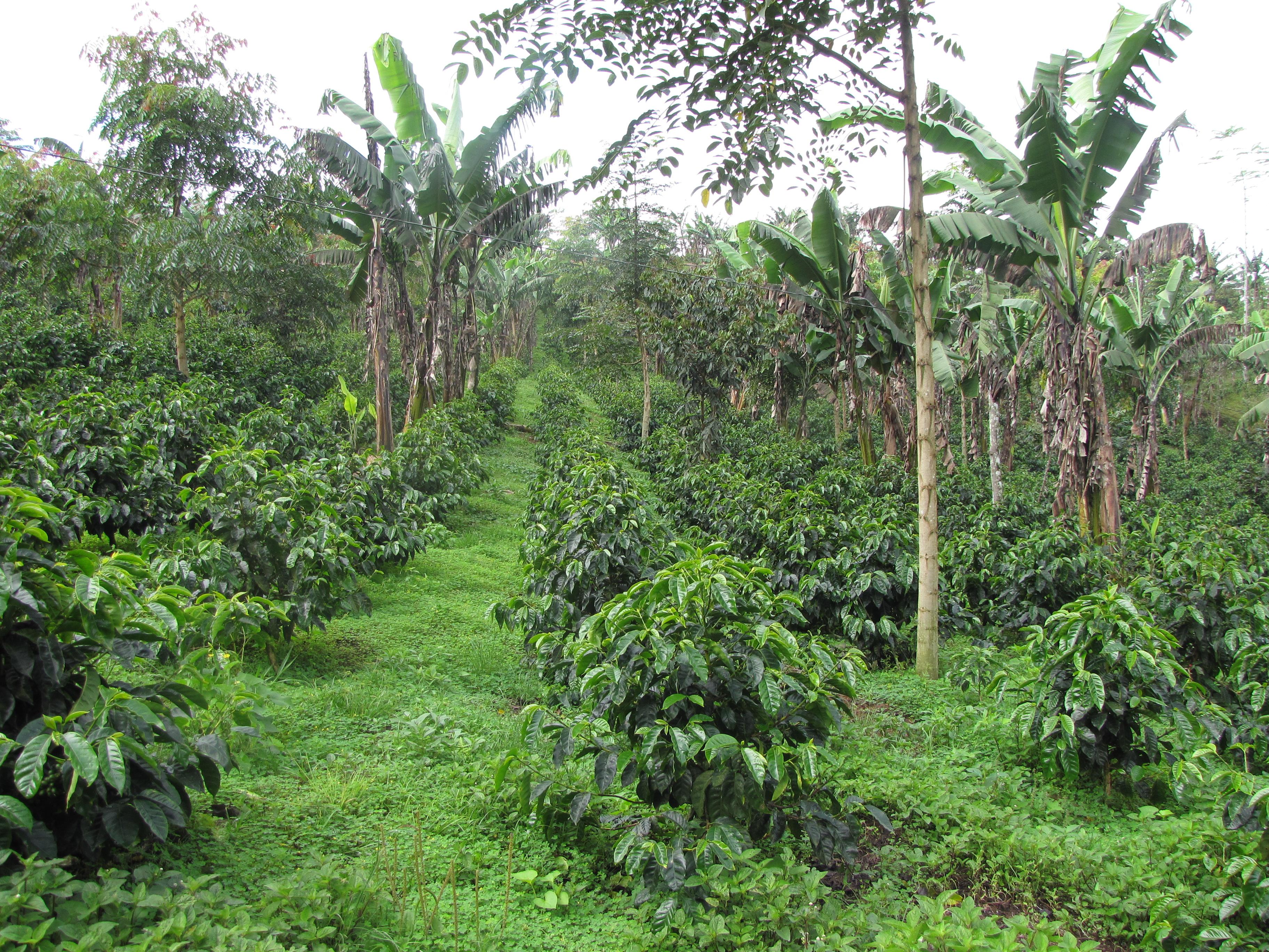 Vista de la plantación