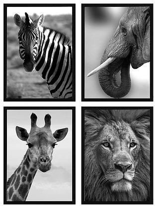 Fotografías animales (4 diseños disponibles) / Desde 23.000 c/u