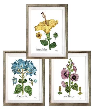 Botánica (5 diseños disponibles) / Desde 40.000 c/u
